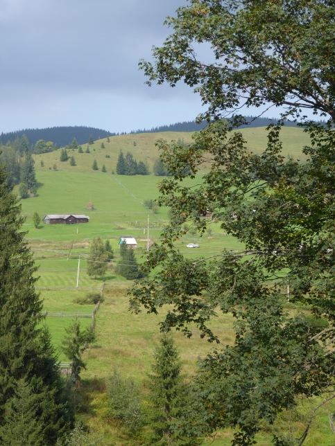 Carpathian fields