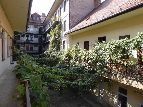 City vines in Cluj